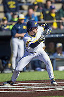 Michigan Wolverines shortstop Michael Brdar (9) squares to bunt against the Central Michigan Chippewas on March 29, 2016 at Ray Fisher Stadium in Ann Arbor, Michigan. Michigan defeated Central Michigan 9-7. (Andrew Woolley/Four Seam Images)