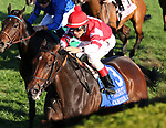 October 12, 2019 : #3 Cambier Parc and jockey John Velazquez win the 36th running of The Queen Elizabeth II Challenge Cup Presented by Lane's End Grade 1 $500,000 for owner OXO Equine and trainer Chad Brown at Keeneland Race Course in Lexington, KY on October 12, 2019.  Candice Chavez/ESW/CSM