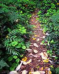 Hiking trail on Bainbridge Island, Washington