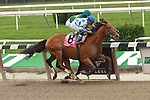26 09 2009: Global Force (inside) by Giant's Causeway x Debit Account, wins by disqualification over Buddy's Saint (Saint Liam x Tuzie) in the 5th race for 2 year olds at 6 1/2 furlongs at Belmont Park, Elmont, NY