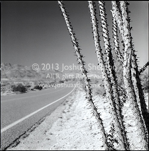 Ocotillo branches by road through desert<br />