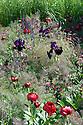 Laurent-Perrier Garden, designed by Luciano Giubbilei, RHS Chelsea Flower Show 2009. Plants include: Astrantia 'Hadspen Blood', Deschampsia cespitosa, Fennel Foeniculum vulgare 'Giant Bronze', Iris 'Black Swan', Peony Paeonia 'Buckeye Belle', Salvia nemorosa 'Caradonna'.