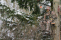 00105-050.05 Bowhunting: Archer in tree stand is well camouflaged as he hunts on cold day after recent snow fall.  Hunt, winter, late season, spruce.
