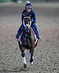 LOUISVILLE, KY - MAY 02: Rachel's Valentina, trained by Todd Pletcher, exercises and prepares during morning workouts for the Kentucky Derby and Kentucky Oaks at Churchill Downs on May 2, 2016 in Louisville, Kentucky. (photo by John Voorhees/Eclipse Sportswire/Getty Images)