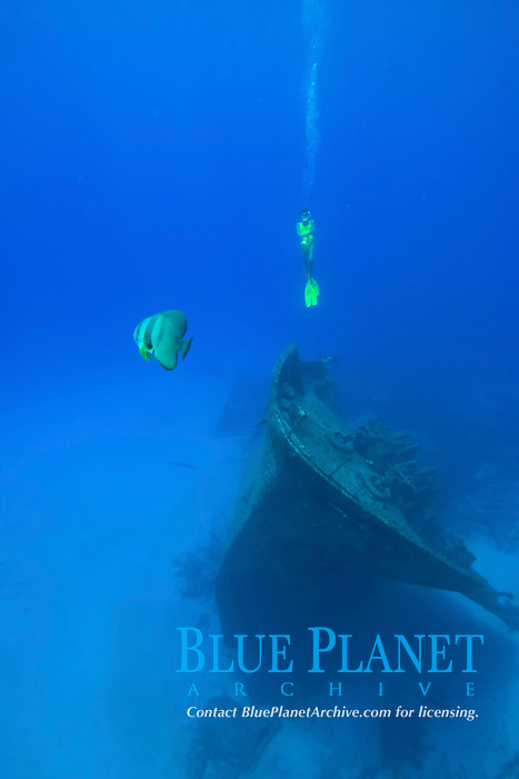 batfish, Platax sp., scuba diver and the ship wreck The Shoun Maru, a WWII Japanese freighter, sits in 100 feet of water off Rota with its prominent bow. The island of Rota is in the Northern Mariana Islands, CNMI, West Pacific Ocean