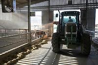 CROATIA, cattle fatening farm ERGELA VIŠNJICA for livestock export / KROATIEN, Tiermastbetrieb ERGELA VIŠNJICA, Rinderzucht für den Fleisch Export, 2000 Tiere, Einstreuung von Stroh
