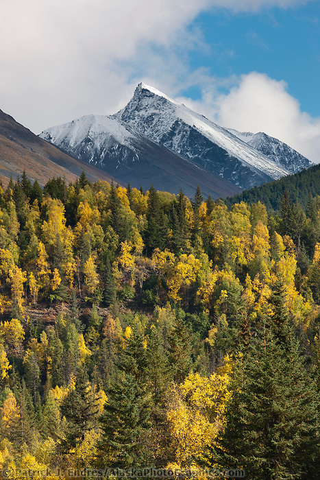 Autumn colors on the mountain hillsides of the Kenai mountains, Chugach National Forest, southcentral, Alaska.