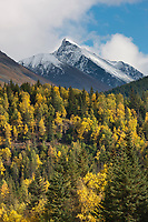 Autumn colors on the mountain hillsides of the Kenai mountains, Chugach National Forest, southcentral, Alaska.