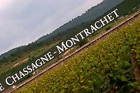 vineyard dom m picard chateau de ch-m chassagne-montrachet cote de beaune burgundy france