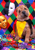 Xavier, ANIMALS, REALISTISCHE TIERE, ANIMALES REALISTICOS, dogs, photos+++++,SPCHDOGS1028,#a#, EVERYDAY