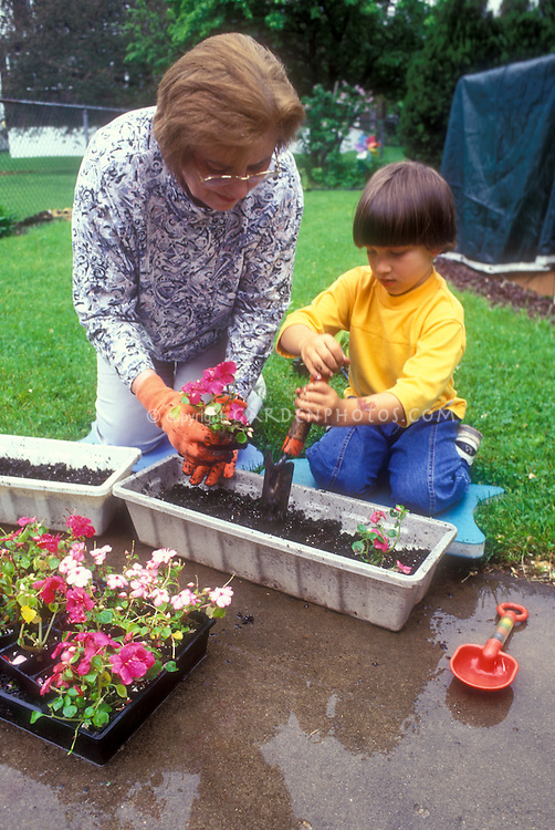 Grandmother and grandchild gardening together, with garden gloves, backyard grass, little boy and senior citizen intergenerational interaction between young and old person, impatiens flowers