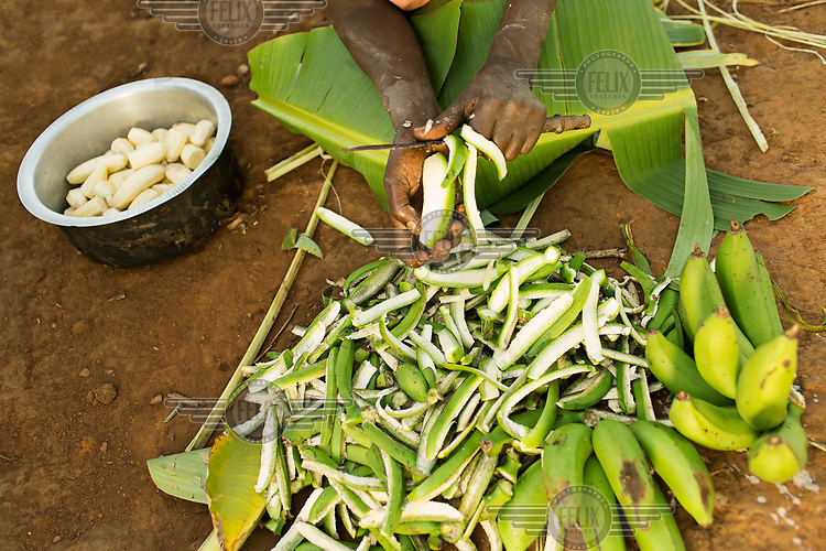 Gertrude Ndolikye (51), who is HIV+ and being treated with ARVs, prepares matoke, a staple made from mashed green bananas from her kitchen garden.