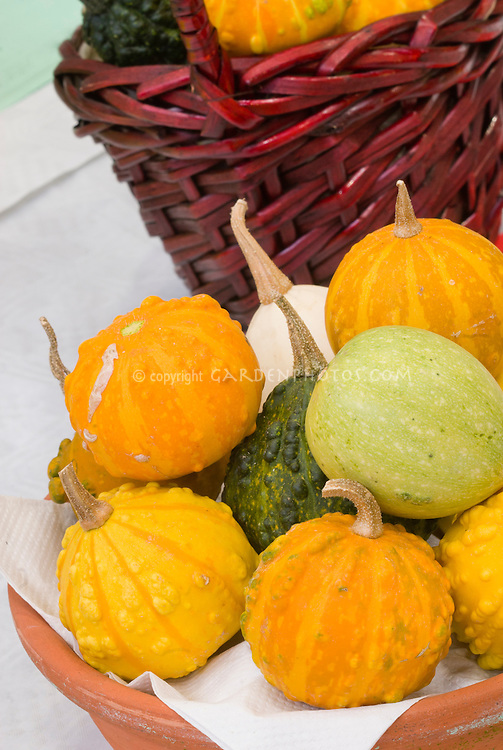 Gourd harvest mixture picked in autumn vegetables, orange, yellow, green, in basket