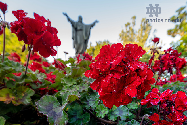 July 7, 2020; Flowers near the Sacred Heart Jesus statue on Main Quad (Photo by Matt Cashore/University of Notre Dame)