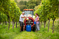 BNPS.co.uk (01202 558833)<br /> Pic: MaxWillcock/BNPS<br /> <br /> Pictured: Karen oversees Simon pouring cheese whey into a barrel.<br /> <br /> A bio-dynamic vineyard has found a way to use the perfect pairing of cheese and wine to protect its grapes.<br /> <br /> Little Waddon Vineyard is trialling using whey left over from the cheese-making process as a natural fungicide to treat downy mildew.<br /> <br /> The organic vineyard in Dorset decided to give the new method a try after a wet and dismal summer saw its vines get infected.