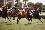 Silver Cloud (#7) with jockey Fernando Jara gets up late to win the Bob Umphrey Turf Sprint Calder Race Course, Summit of Speed day. Miami Gardens,  Florida. 07-06-2013