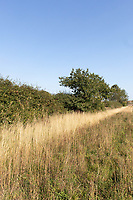 14.9.2020 Field margin in Rutland<br /> ©Tim Scrivener Photographer 07850 303986<br />      ....Covering Agriculture In The UK.
