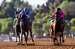 FEB 01: Thousand Words with Flavien Prat defeats High Velocity with Joel Rosario to win the bomb Lewis Memorial Stakes at Santa Anita Park in Arcadia, California on Feb 01, 2020. Evers/Eclipse Sportswire/CSM