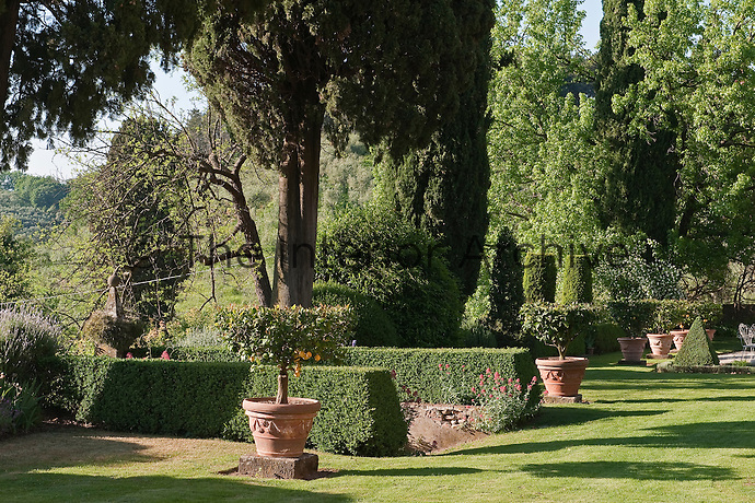 The lawn is punctuated with lemon trees grown in terracotta pots and pruned in the traditional Tuscan 'goblet' shape