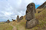 Standing Moai at Ranu Raraku<br /> On the outside of the quarry are a number of Moai some of which are partially buried to their shoulders in the soil from the quarry. They are distinctive in that their eyes were not hollowed out.