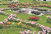 Luiz, FLOWERS, photos, BRLH8700,#f# Blumen, Natur, flores, naturaleza