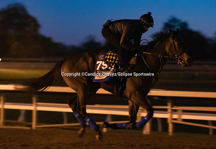 Princess Noor, trained by trainer Bob Baffert, exercises in preparation for the Breeders' Cup Juvenile Fillies at Keeneland Racetrack in Lexington, Kentucky on November 4, 2020.