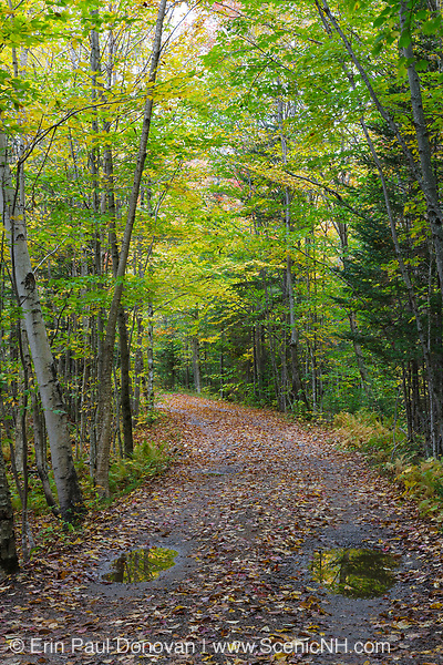 Elbow Pond Road in North Woodstock, New Hampshire during the autumn months. This is a seasonal road that is closed during the winter months. And it follows the old railroad bed of the Elbow Pond Branch of the Gordon Pond Railroad (1907-1916).