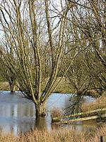 Moorweiher mit Kopfweide, Kopfbaum, Kopfweiden, Kopfbäumen, Feuchtgebiet, Sumpf, Tümpel, Bruchwald, Wiedervernässung, Hellmoor, Panten, Schleswig-Holstein