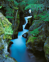 Avalanche Creek cascades deep in the forest from Avalance Lake.   The glacier melt water gives the unique blue-green color.  Located in Glacier National Park.