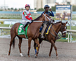 HALLANDALE BEACH, FL - JAN 13:Shining Copper #5 with Jose Ortiz in the irons prepares to run the $200,000 Fort Lauderdale Stakes for trainer Michael J. Maker at Gulfstream Park on January 13, 2018 in Hallandale Beach, Florida. (Photo by Bob Aaron/Eclipse Sportswire/Getty Images)