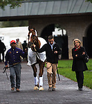 Two-time Horse of the Year, Wise Dan parading at Keeneland. Samantha Bussanich/ESW/Cal Sport Media