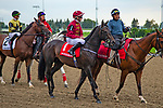 TORONT,CANADA-SEP 15: Vitalogy is post parading before the Summer Stakes at Woodbine Race Track on September 15,2019 in Toronto,Ontario,Canada. Kaz Ishida/Eclipse Sportswire/CSM
