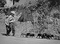 Schweinehirte in Chichicastenango im Hochland von Guatemala, 1970er Jahre. Swineherd at Chichicastenango in the highlands of Guatemala, 1970s.