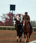 Tiz The Law, trained by trainer Barclay Tagg, exercises in preparation for the Breeders' Cup Classic at Keeneland Racetrack in Lexington, Kentucky on October 30, 2020.