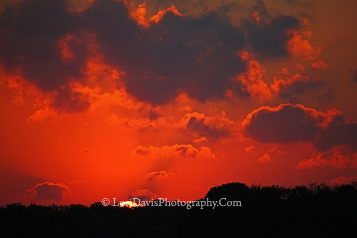 Sun Disappearing on Horizon  #FL24
