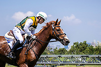 AUS-Andrew Hoy rides Vassily de Lassos during the Eventing Cross Country Team and Individual. Tokyo 2020 Olympic Games. Sunday 1 August 2021. Copyright Photo: Libby Law Photography