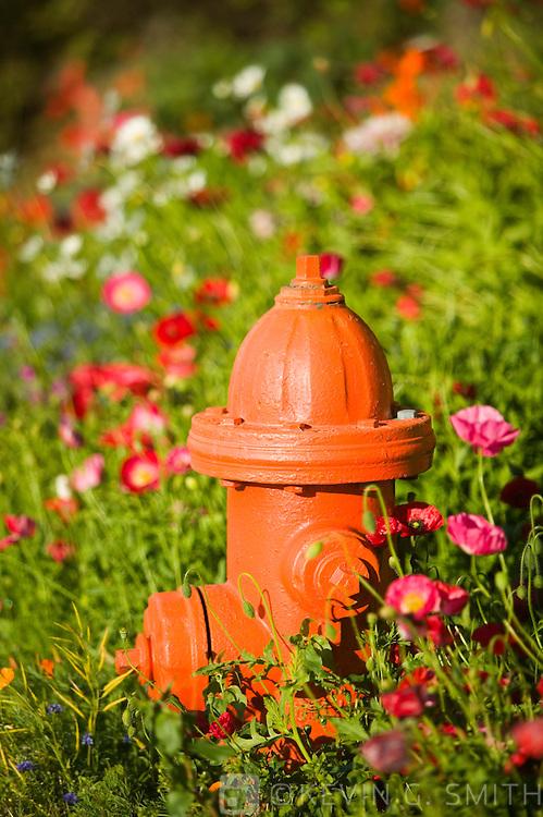 Fire hydrant and flowers, Kodiak Alaska, UA.