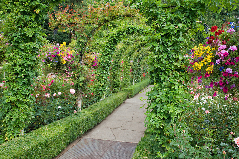Arched pathway with flowers. Butchart Gardens, B.C. Canada