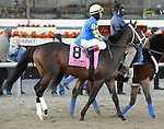 Intense Holiday (no. 8), ridden by Joel Rosario and trained by Todd Pletcher, runs in the 100th running of the grade 2 Remsen Stakes for two year olds on November 30, 2013 at Aqueduct Race Track in Ozone Park, New York.  (Bob Mayberger/Eclipse Sportswire)