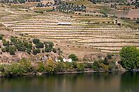 douro river and steep vineyards  alves de sousa sign douro portugal