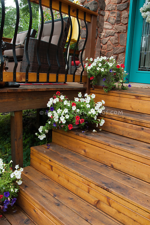 Pot containers planters of annual flowers petunias on wooden deck steps leading to teal colored door and raised deck