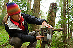 North American Cougar (Puma concolor couguar) biologist Patty Ten Boom Byrnes attaching camera trap to stump, Sweeney Ridge, Bay Area, California