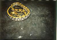 serpente  snake