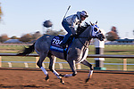 November 4, 2020: Essential Quality, trained by trainer Brad Cox, exercises in preparation for the Breeders' Cup Juvenile at Keeneland Racetrack in Lexington, Kentucky on November 4, 2020. Gabriella Audi/Eclipse Sportswire/Breeder's Cup/CSM