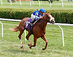 Tap Tap Taparoo (no. 10) wins Race 3, Aug. 19, 2018 at the Saratoga Race Course, Saratoga Springs, NY.  Ridden by  Manuel Franco, and trained by James Toner  Tap Tap Taparoo  finished 4 lengths in front of Alternative Energy (no. 8).  (Bruce Dudek/Eclipse Sportswire)