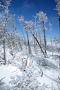 Snow covered forest along the Hancock Loop Trail in the White Mountains, New Hampshire USA during the winter months.