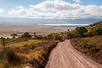 Tanzania. Ngorongoro Crater Road Heading down into Crater Floor.  Salt Flat in Distance.