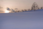 Apple Trees on a Snowy Hilltop at Dusk on a Winter Day in New Hampshire