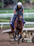 Klimt, owned by Kaleem Shah, Inc. and trained by Bob Baffert, exercises in preparation for the Breeders' Cup Sentient Jet Juvenile