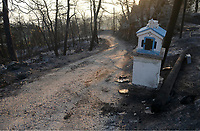 Pictured: A road that leads to a burned out forest.<br />